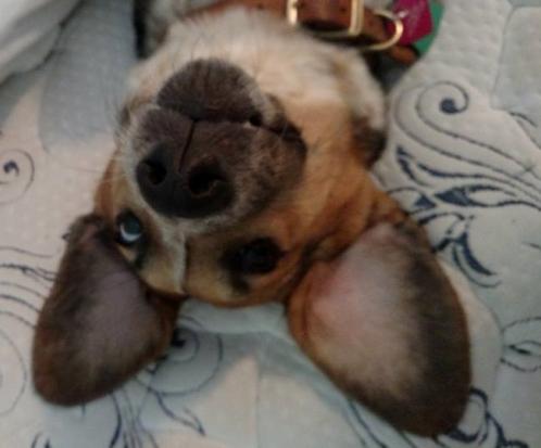 Athena upside down